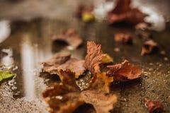 упаденные осенью листья земли Стоковые Фотографии RF