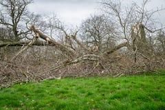 упаденные повреждением валы шторма пущи Стоковые Фотографии RF