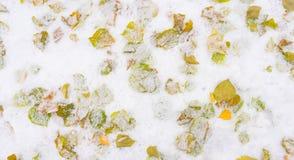 Упаденные предпосылкой листья дерева в снеге Стоковые Фотографии RF