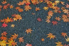Упаденные предпосылкой красные листья апельсина Стоковое Фото