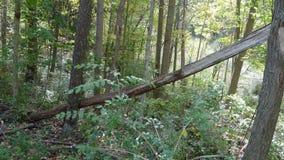 упаденные древесины вала Стоковые Изображения