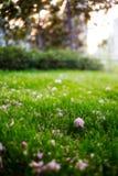 упаденные цветки Стоковые Фото