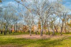 упаденный вал листьев Стоковые Изображения