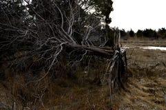 упаденный вал Стоковое Фото
