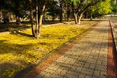 Упаденный желтый цветок в пути прогулки Стоковые Изображения RF