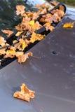 Упаденный желтый цвет выходит на стекло и клобук автомобиля Стоковые Фотографии RF