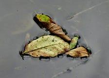 Упаденный и плавать Стоковая Фотография