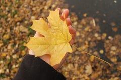 Упаденный кленовый лист Стоковые Изображения