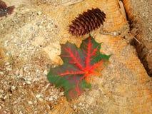 Упаденный кленовый лист Стоковая Фотография RF