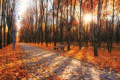 упаденный спуск стенда осени цветастый выходит валы парка Стоковое фото RF