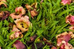 Упаденный цветок на траве/цветке на траве/упаденном цветке на траве в предпосылке парка Стоковая Фотография