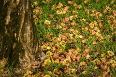Упаденный цветок на траве/цветке на траве/упаденном цветке на траве в предпосылке парка Стоковая Фотография RF