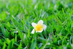 упаденный цветок Стоковые Фотографии RF