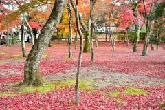 Упаденный японский красный кленовый лист в парке Стоковые Изображения RF