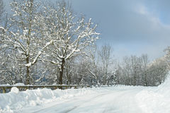 упадено свеже идите снег Стоковые Фотографии RF
