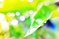 упадите вода листьев Стоковое Фото