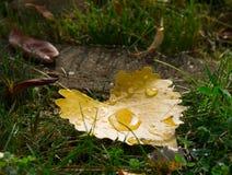 упадите вода листьев Стоковое фото RF