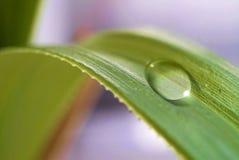 упадите вода листьев Стоковые Изображения RF