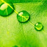 упадите вода листьев Стоковое Изображение RF