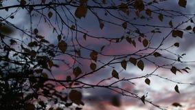 Упадите в листья осени леса и небо захода солнца видеоматериал