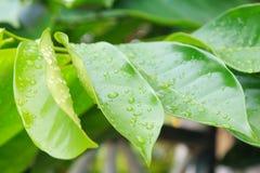Упадите листья на листьях в утре Стоковые Фотографии RF
