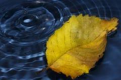 упадите листья Стоковая Фотография RF