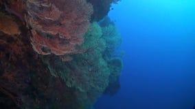 Упадите на коралловый риф видеоматериал