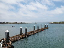 уплотнение гавани колонии Стоковые Фото