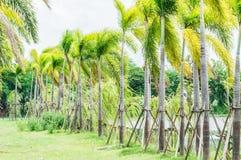 Упорка дерева. Стоковые Фото