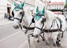 управляемый Лошад экипаж на улице в вене, Австрии традиция средневековая стоковое фото
