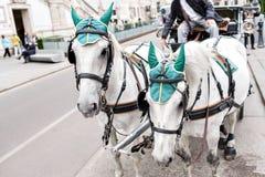 управляемый Лошад экипаж на улице в вене, Австрии традиция средневековая стоковые изображения