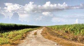 Управляйте через поля тросточки Стоковое Изображение
