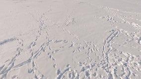 управлять зимой розвальней потехи Отключение на снегоходе 2 парня едут снегоход над замороженным льдом озера