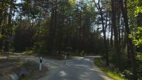 Управлять на дороге леса сток-видео