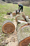 Управление лесов, практики лесохозяйства Стоковые Фото