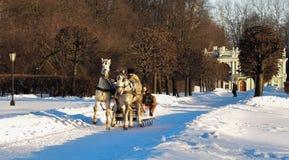 управлять зимой розвальней потехи Стоковая Фотография RF