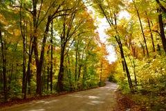Управлять через осенний лес Стоковое Изображение