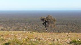 Управлять Nullabor на шоссе в австралийском захолустье Стоковые Фото