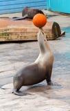 Уплотнение жонглирует оранжевым баскетболом Стоковые Фотографии RF