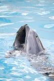 Уплотнение и дельфин Стоковое Фото