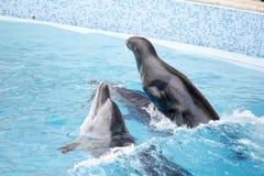 Уплотнение и дельфин Стоковые Изображения RF