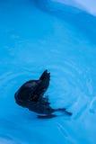 Уплотнение на зоопарке в Белграде Стоковая Фотография