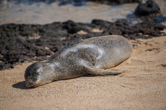 Уплотнение на пляже Стоковые Фотографии RF