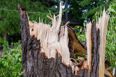 Ураган в древесинах сломленный пень дерева с обломоками Стоковая Фотография