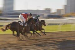 Урбанская гонка лошади Стоковая Фотография RF