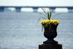 Урна желтых цветков рассматривая waterview Стоковые Фотографии RF