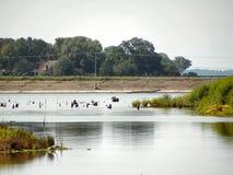 Уровень отлива Ливингстона озера Стоковые Фотографии RF