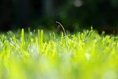 уровень травы глаза стоковые фотографии rf