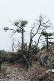 Уродское, изогнутое дерево странных форм пугающе стоит в тумане стоковое изображение