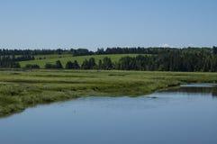 Урожаи берега реки стоковые фотографии rf